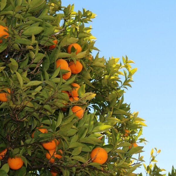 EO Petitgrain mandarijn
